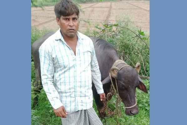 crime-branch-nit-faridabad-arrested-bhains-chor-nijam
