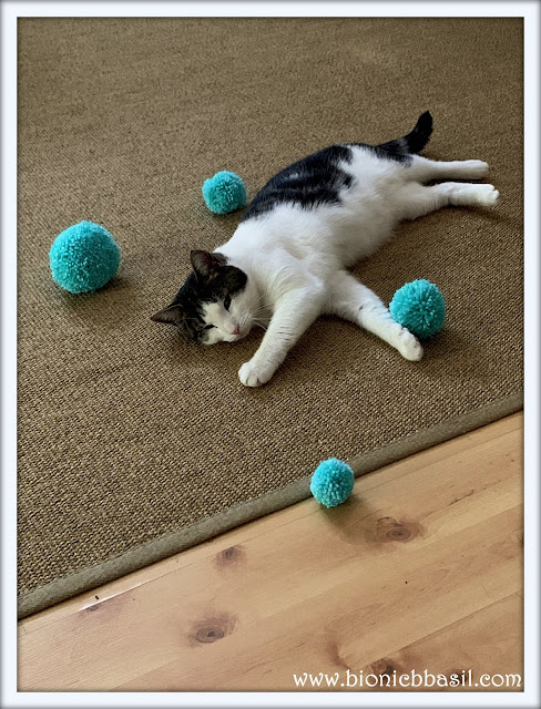 The Relativity of Pom Poms at Ground Level with Melvyn @BionicBasil® The Pet Parade 316