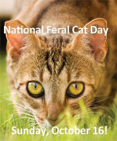 National Feral Cat Day Wishes for Whatsapp