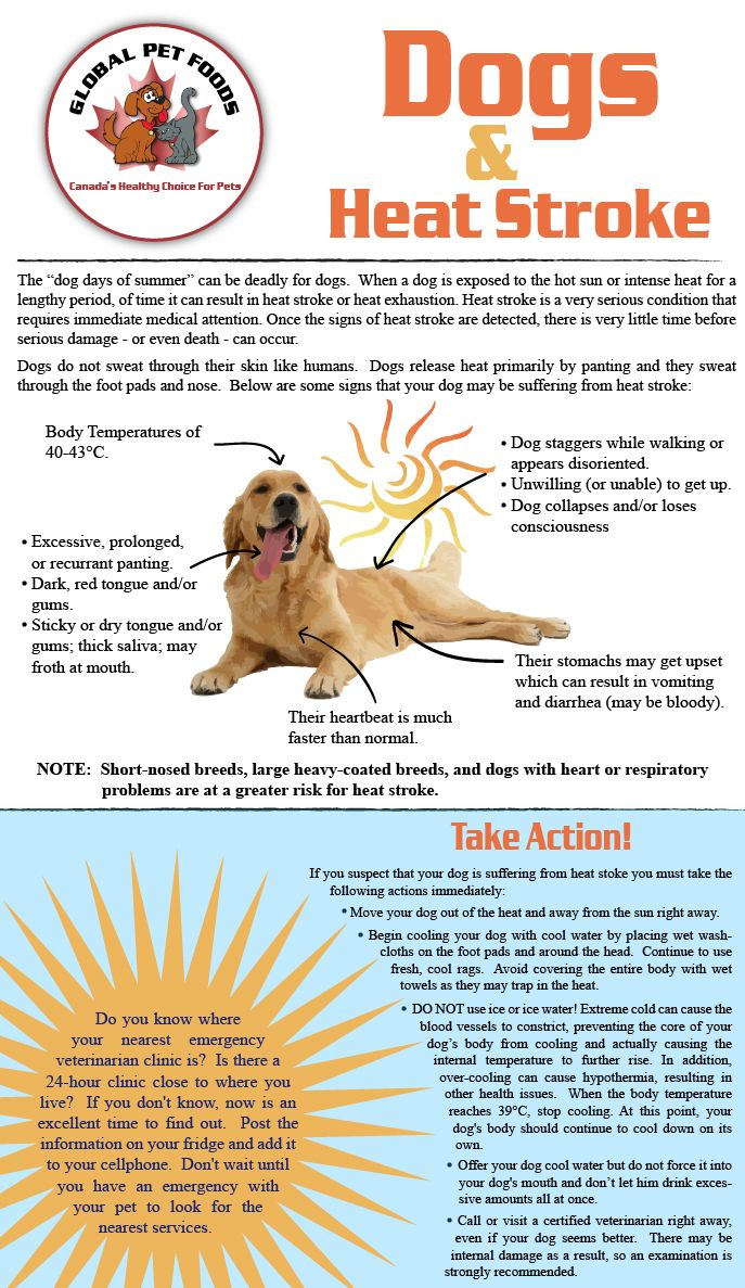 A Mastiff Blog Dogs And Heat Stroke Know The Signs And