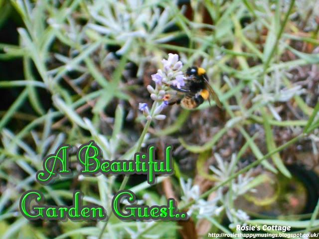 A Beautiful Garden Guest....