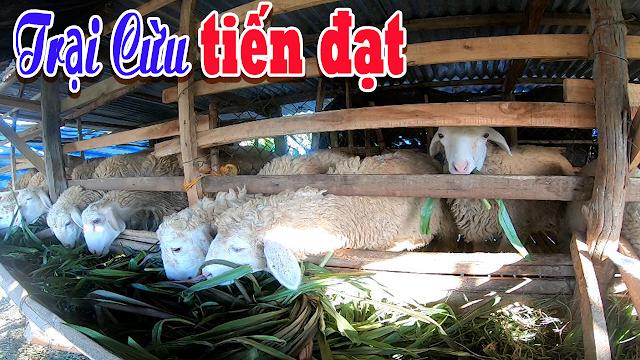 Trại Cừu Tiến Đạt lừa đảo