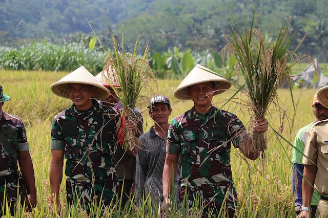 Dengan Pupuk Organik, TNI AD Sejahterakan Petani di Pedesaan