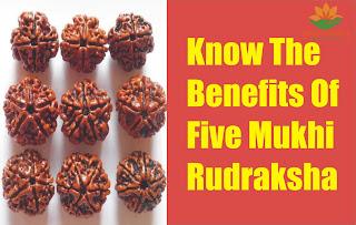 Know the Benefits of Five Mukhi Rudraksha
