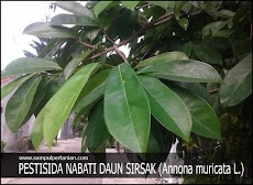 Pestisida Nabati Wereng batang coklat dari daun Sirsak (Annona muricata L)