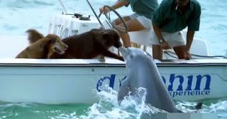 Η στιγμή που δελφίνι πλησιάζει σκάφος για να φιλήσει δυο σκύλους