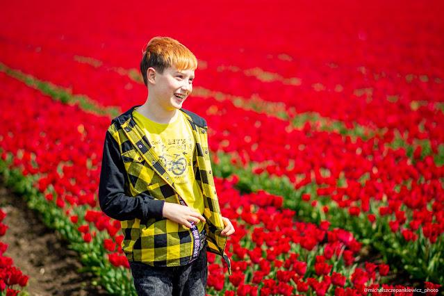 czerwone pole tulipanów