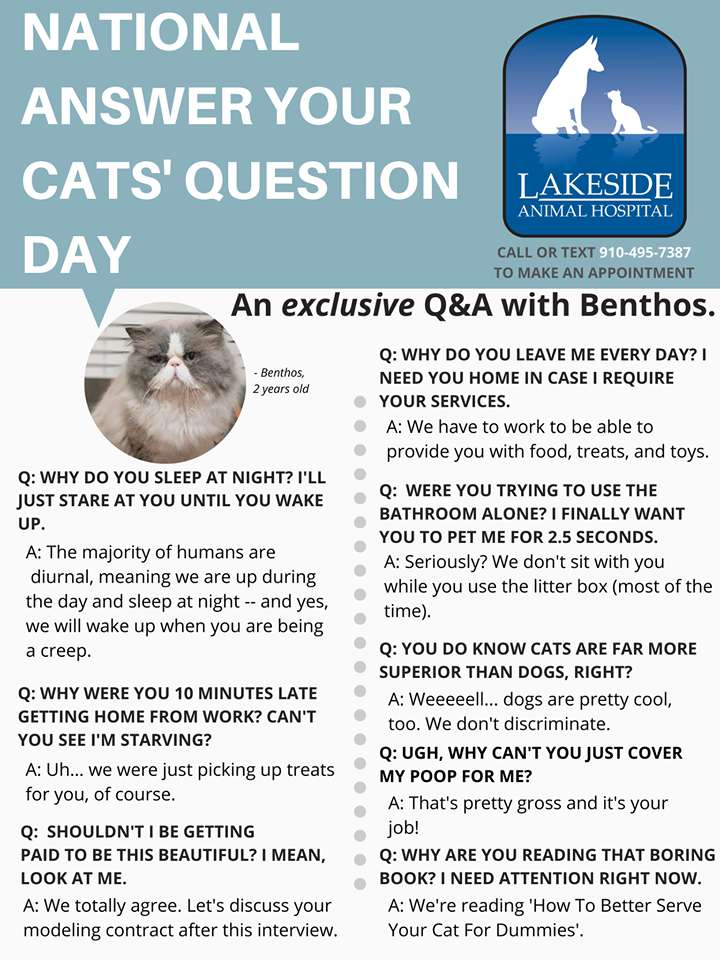 National Answer Your Cat's Questions Day Wishes Awesome Picture
