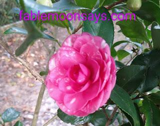Uma flor japonesa