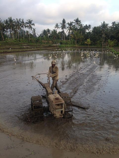aide leit-lepmets indoneesia inspiratsioon riisipõld riisipõllud