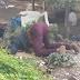 Cobrador de guagua fue encontrado muerto en San Juan