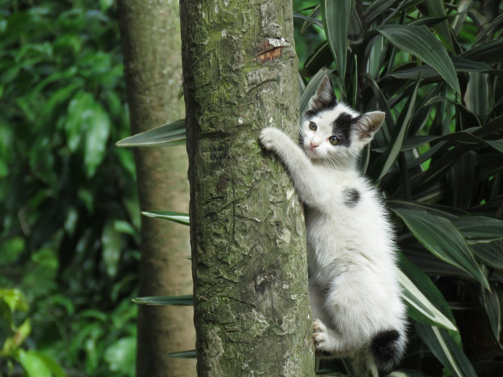 Cat clinging on tree trunk photo,cat images