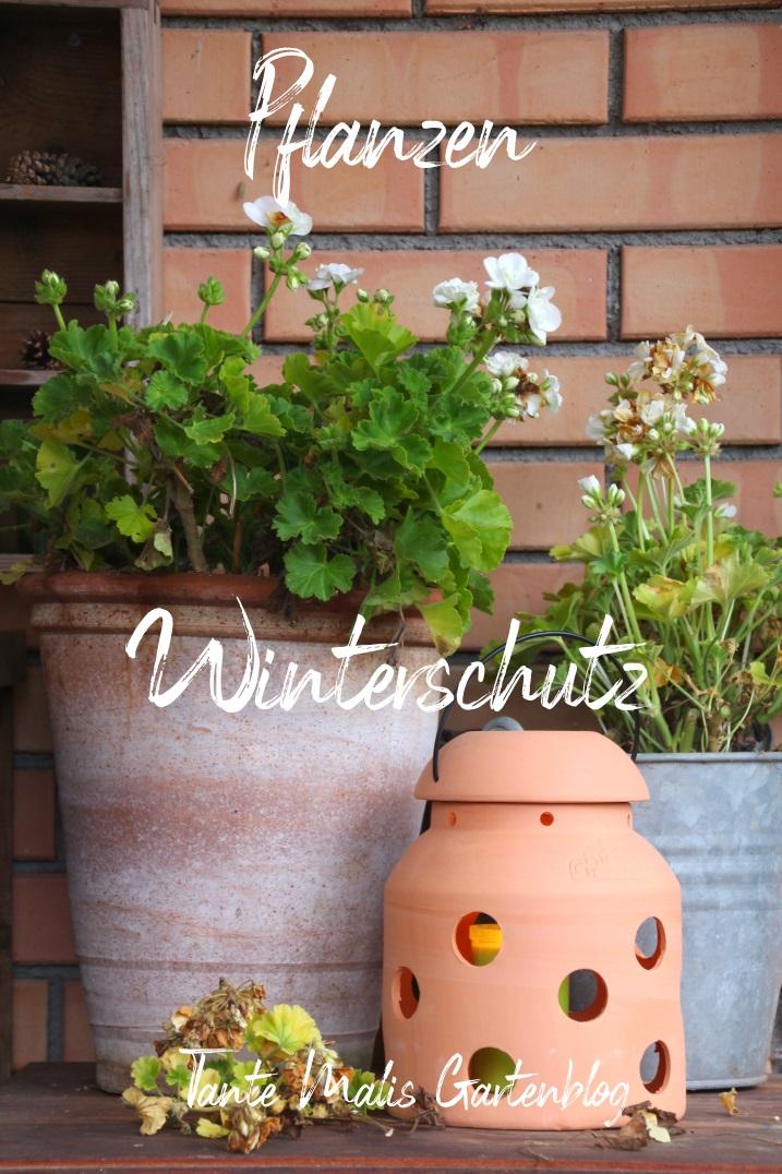 Geranien und Terracotta-Ofen