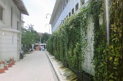 Tukang Taman Vertikal Surabaya | Vertical Garden 14