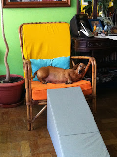 rampa poltrona para cães