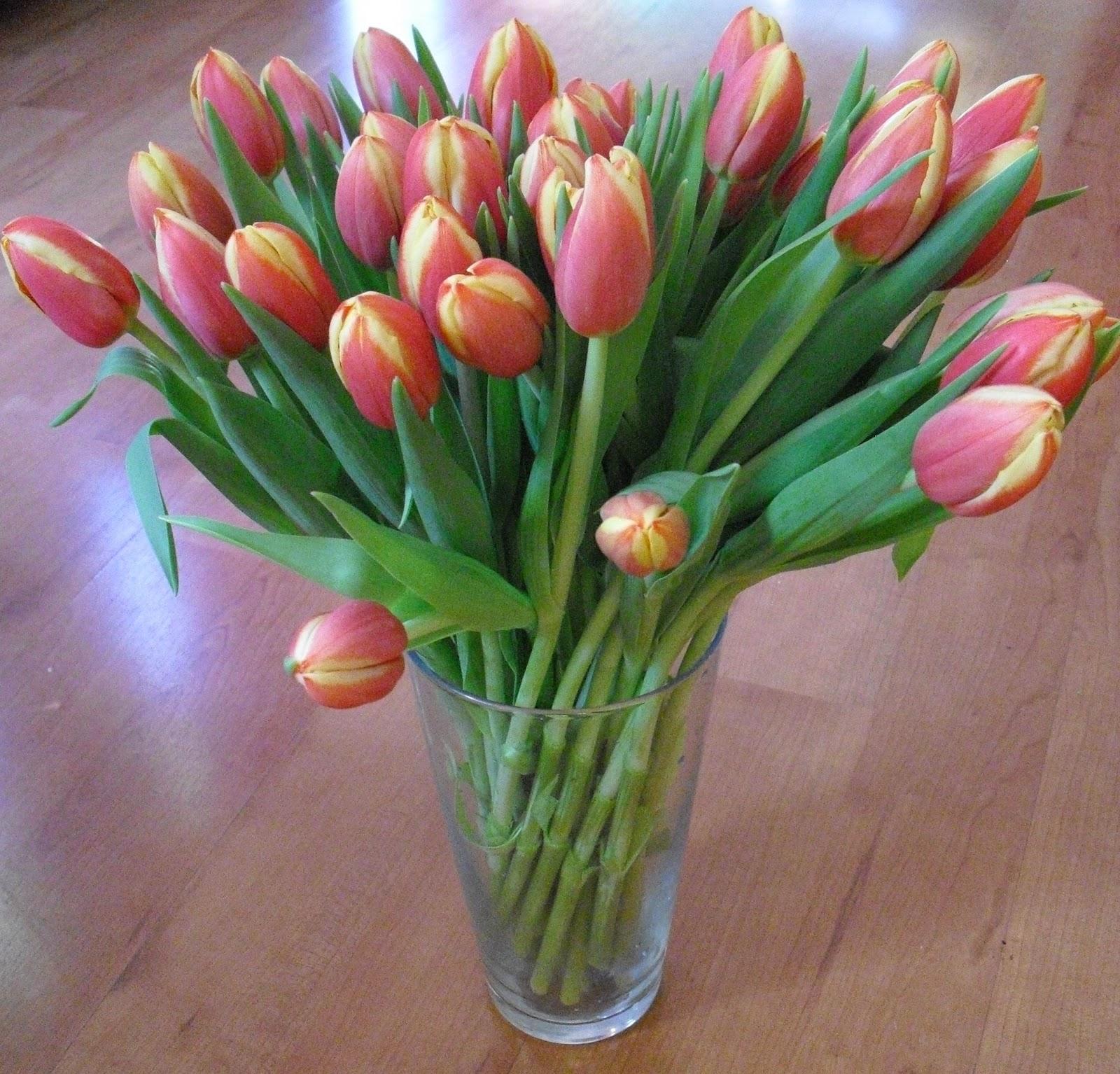 Tulip Amsterdam Keukenhof: When In Amsterdam...: Holland's Keukenhof Gardens Open