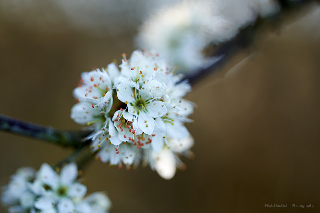 Handheld macro image of spring blossoms with shallow depth of field