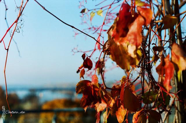 widok z dachu buw, jesień, rośliny