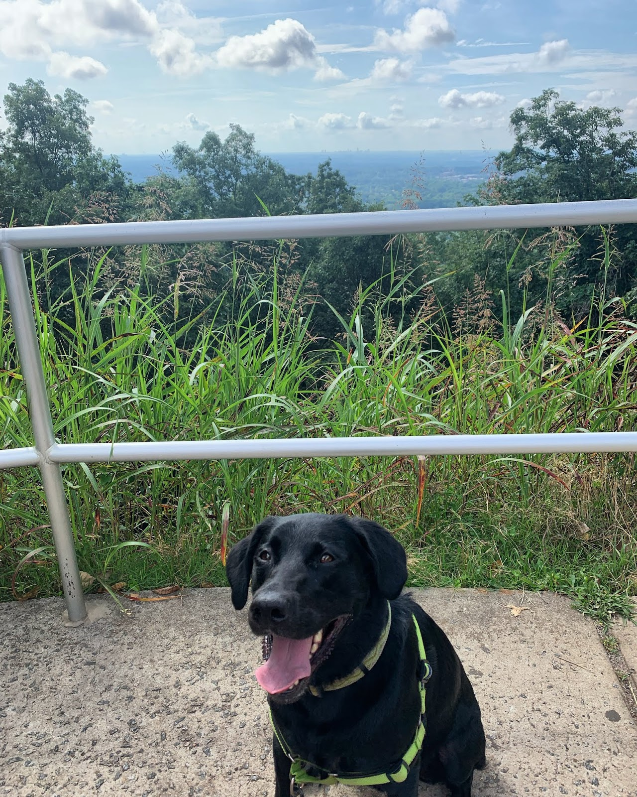A black lab smiling with the Atlanta skyline in the distance behind him