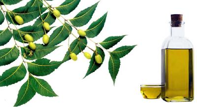 minyak neem