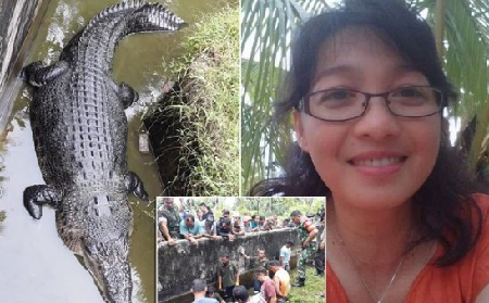 Deasy Tuwo  Was Giving The Crocodile Named Merry Lumps Of Meat Last Friday Morning In North Sulawesi Indonesia