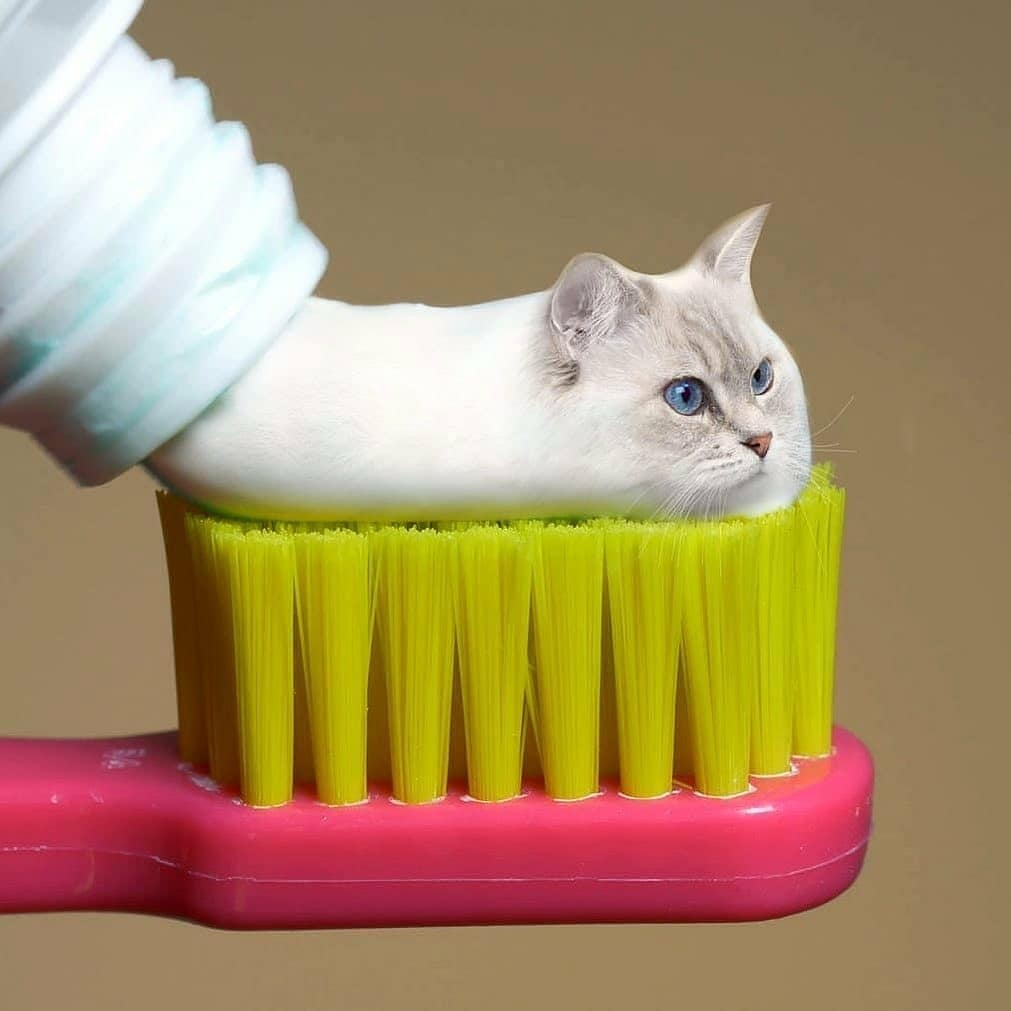 Cat-paste - photo manipulation