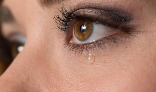 Σπάνιο είδος μέλισσας τρέφεται με… δάκρυα