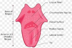 Tongue Diagnosis Penyakit