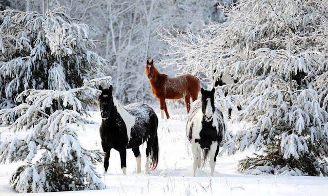 O00 روعة وجمـــال الشتاء ...Ooo