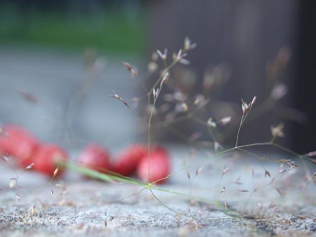 valokuvaus mansikat