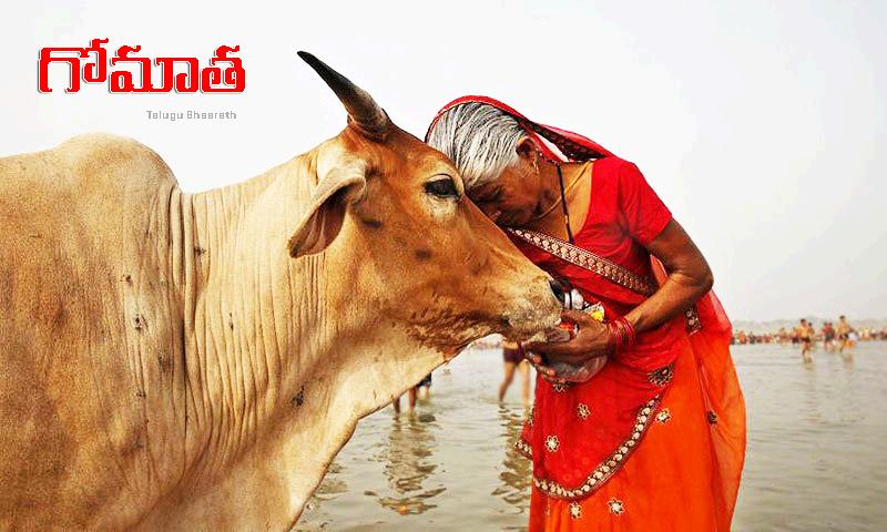 """ఆరోగ్య ప్రదాయిని """"గోమాత"""" - Govu, Gomatha"""