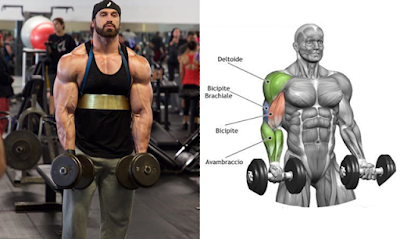 Bicep Workout Program to Guarantee the Biggest Biceps