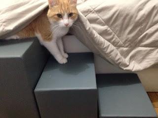 gatos acessando cama com escadas
