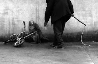 sirk hayvanları