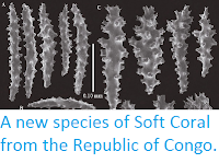 https://sciencythoughts.blogspot.com/2014/12/a-new-species-of-soft-coral-from.html