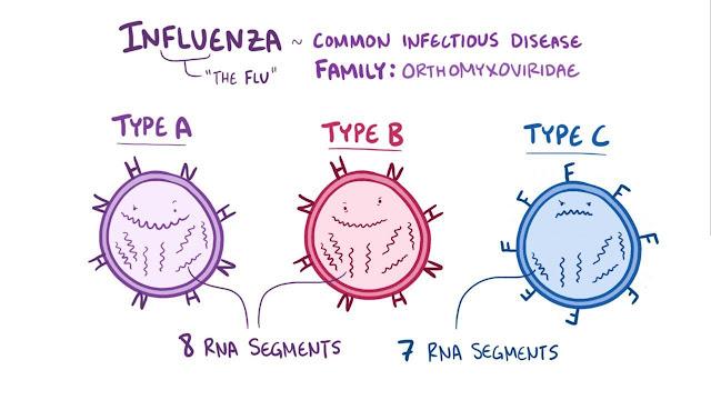 Types of Flu Virus