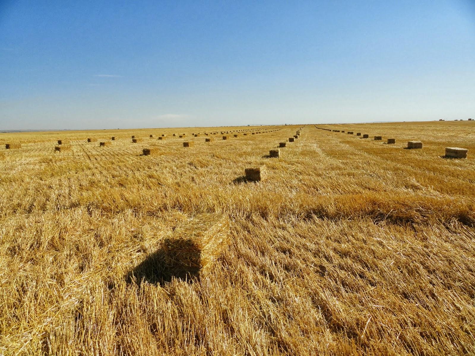 presse agricole moyenne densité