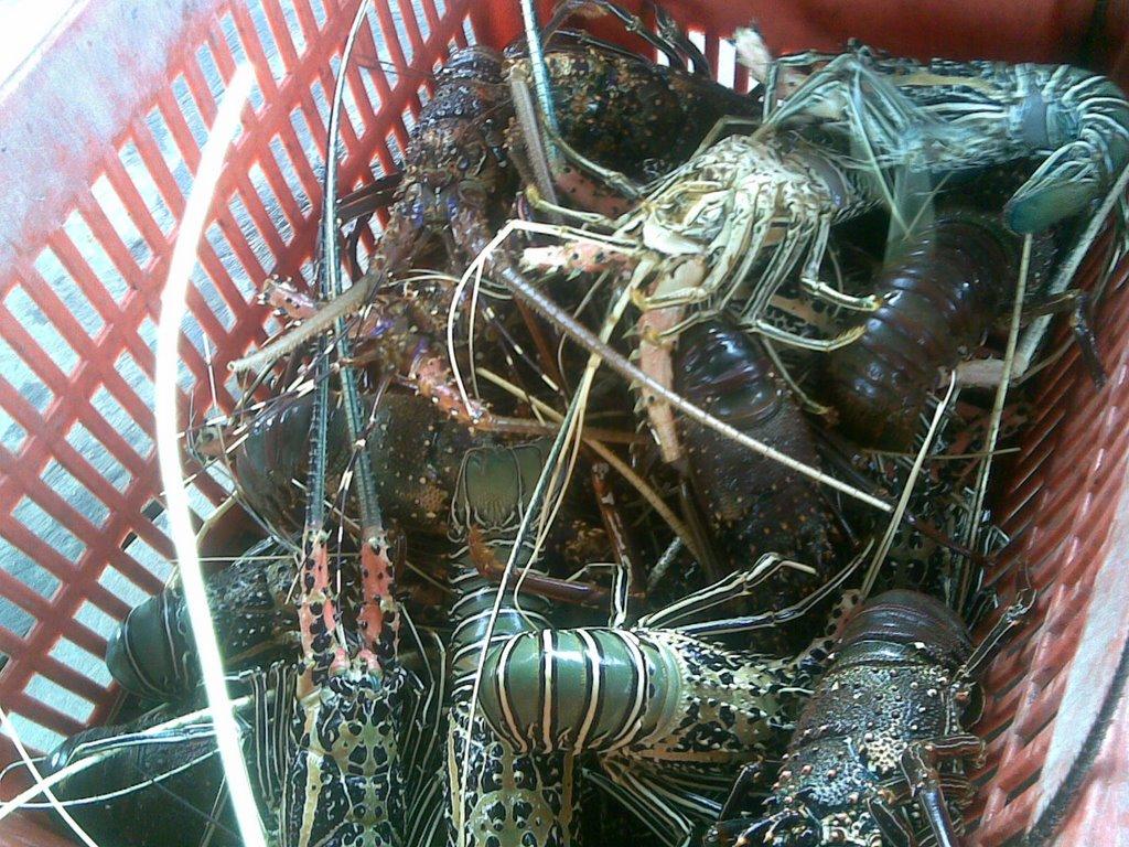 Supplier Shrimp Mail: PASAR IKAN MUARA ANGKE: Supplier Seafood Jakarta