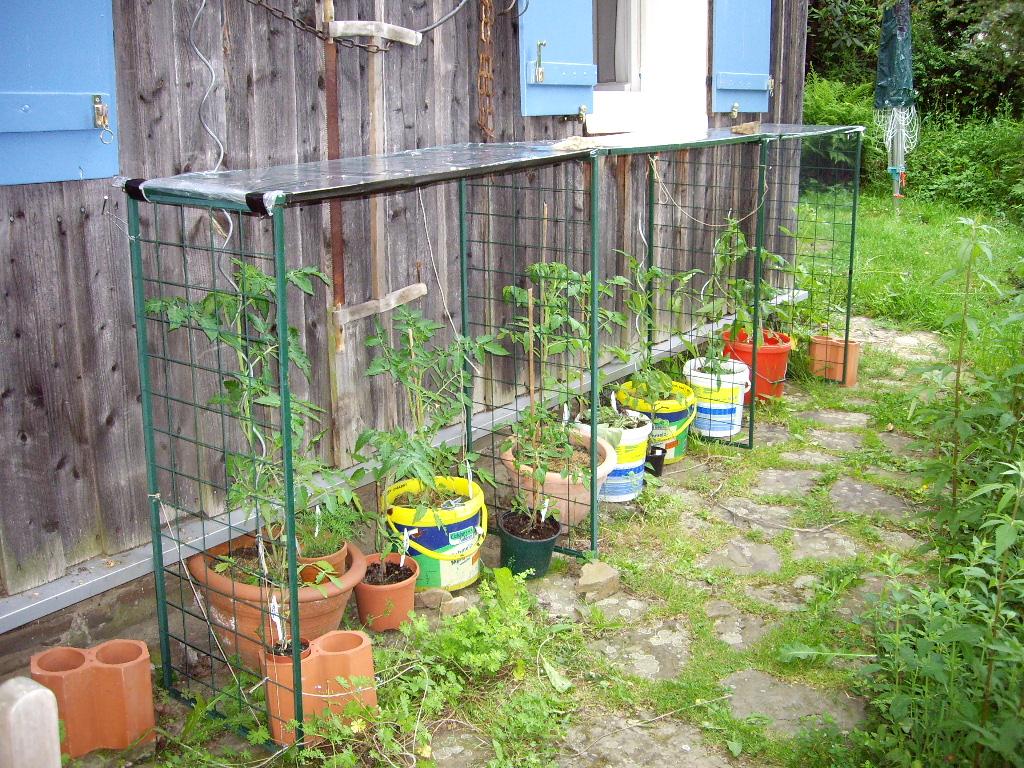 regenschutz f r tomaten tomatendach als regenschutz. Black Bedroom Furniture Sets. Home Design Ideas