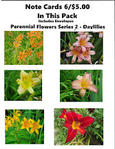 A photo of six daylily perennial flowers