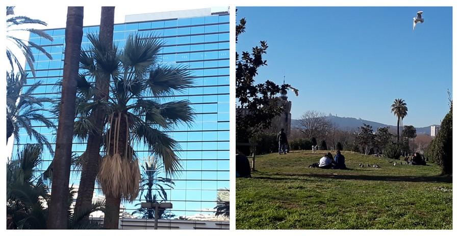 palmiers et parcs à Barcelone