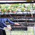 Recrutamento para Trabalhadores Agrícolas e Apanha da Fruta (até 40€ por dia)