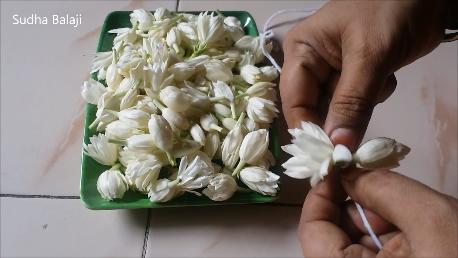 Iruvatchi-jasmine-1ab.png