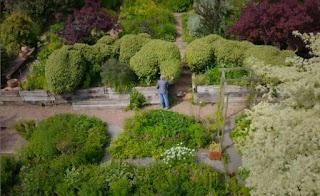 Cloud pruned hedge