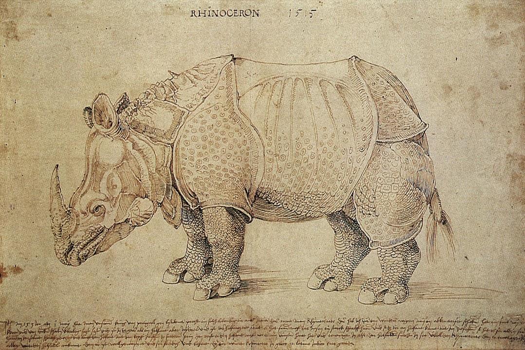 Alberto Durero, Rinoceronte - 1515 - dibujo
