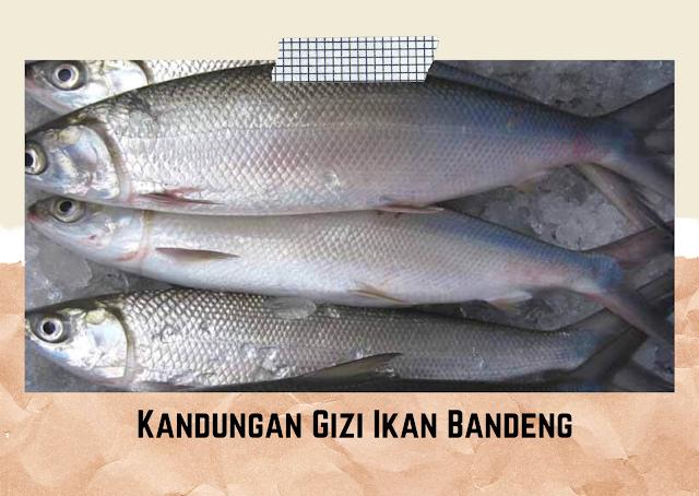Kandungan Gizi Ikan Bandeng