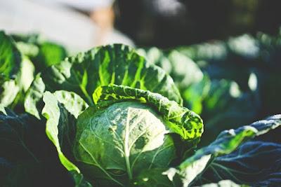 9 فوائد من شأنها أن تقنعك باضافة الملفوف الى نظامك الغذائي