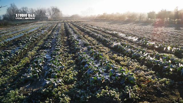 Καθησυχαστική η νυχτερινή θερμοκρασία για την αγροτική παραγωγή στην Αργολίδα