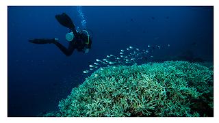 diving tak terlupakan di pulau lombok