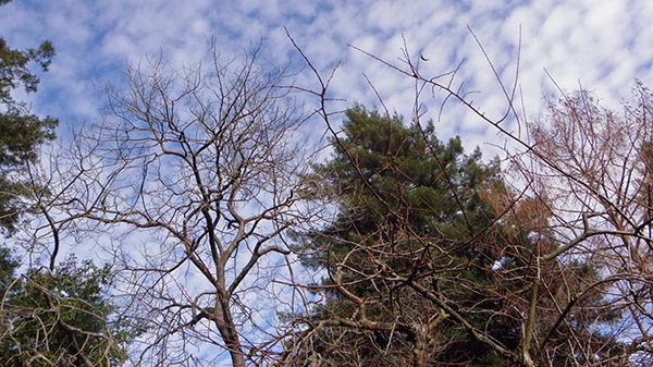 Bare Branches against a Mackerel Sky